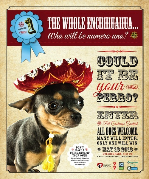 The SF SPCA and 7x7's chihuahua-celebrating party is back for its third year! It's The Whole Enchihuahua 2013, coming to Dolores Park on Saturday, May 18. Why should you go, chihuahua-fancier?  This fun-filled afternoon includes a doggie costume contest, food trucks, live mariachi music, adoptable animals, an exciting dog rally training course, Ask-A-Trainer Q&A, Ask-A-Vet Q&A, free dental checks for dogs, pet-related vendors, and more. Chihuahua mixes represent a disproportionately large and growing percentage of dogs in Bay Area shelters. The Whole Enchihuahua aims to educate the public about Chihuahua overpopulation, while giving San Franciscans an excuse to spend a fun day in the park among adorable dogs!  Want your own little big-eyed pocket-puppy pal? The SF SPCA can introduce you to some little dogs in need of forever homes. After all, having a dog can save your life. Need more convincing? Look at some photos of last year's event! Tiny fancy dogs in tiny fancy costumes! The Whole Enchihuahua goes down on Saturday, May 18, from noon to 3 p.m. in Dolores Park, and the costume contest starts at 2. Get details (many, many details) at SF SPCA. ¡Olé! Got a tip about an awesome vegan-friendly event? Let us know! We love fun!