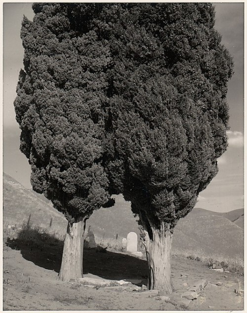 Poplars, Cemetery near Mount Diablo, California, 1960 Ansel Adams