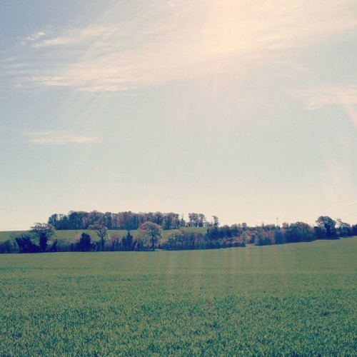 Loving all the sunshine we are getting at the moment! (at Royston)