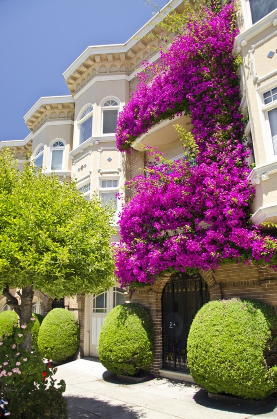 life1nmotion:  Flowers hanging over balcony and adding colour to this place.( Picture By : Gerry Greer )