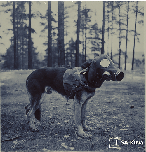 smolderbone:  A war dog with a gas mask.Winter War, Finland.