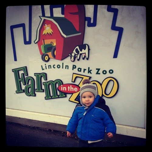 Dylan enjoying the Linkin Park Zoo in Chicago, IL