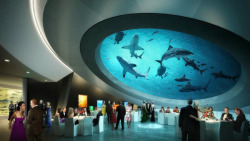 Shark filled Atrium. In Miami Science Museum!The Miami Science Museum is an attraction in the city of Miami, Florida USA. The museum itself…View Post