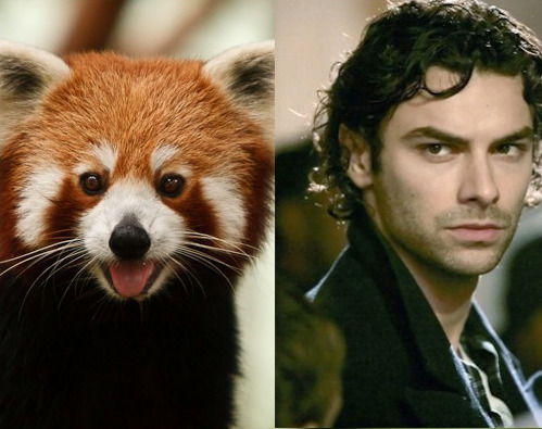 CRUSH OF THE WEEK SHOWDOWN: AIDAN TURNER VS. A RED PANDAby Meghan O'Keefe http://bit.ly/14kR2fZ