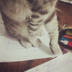 You shall not study for the math test!!! #Cat #test #study #paws