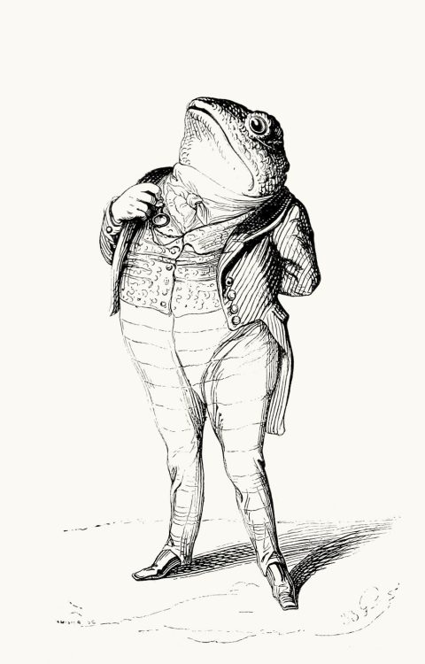 The toad: Everyone has a duty to their country.  J-J. Grandville, from Vie privée et publique des animaux (Public and Private Life of Animals), under the direction of P. J. Stahl, Paris, 1867.  (Source: archive.org)