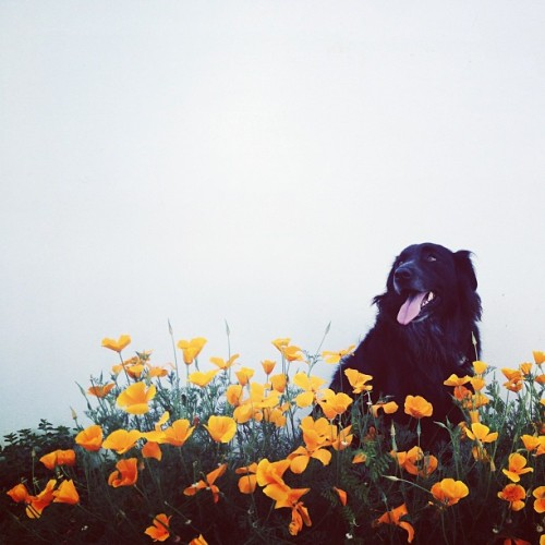 Clementine & the California Poppies.
