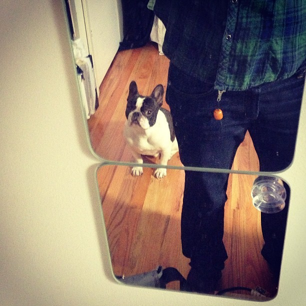 Are you going to take me out? #frenchie #bulldog #nyc