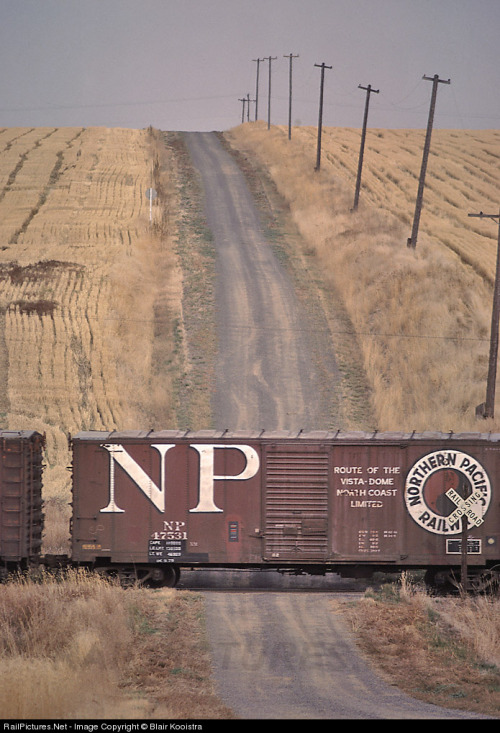Blair Kooistra, photographer: Old forty-foot Northern Pacific boxcars loaded to their 50 ton capacity with wheat clomp across a rural grade crossing near Creston, Washington, bound east on the CW local returning to the mainline at Cheney. High-capacity hopper cars have just about done in the movement of wheat in boxcars in the west; in a few years, such scenes will cease to exist.