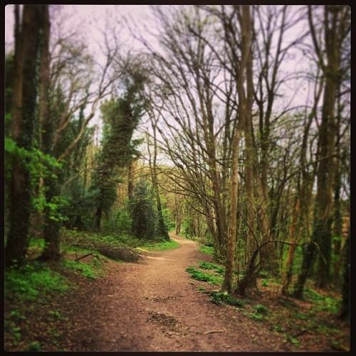 #trail #run #ebphoto #igerseastbourne #training #hope24 #eastbourne #sussex #woods