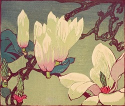 Magnolia by Mabel Royds - woodcut