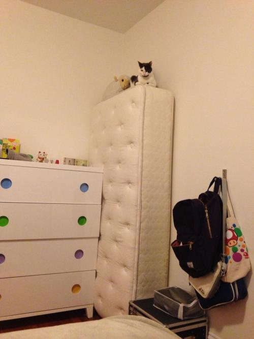 what are you doing up there cat?!  get down!