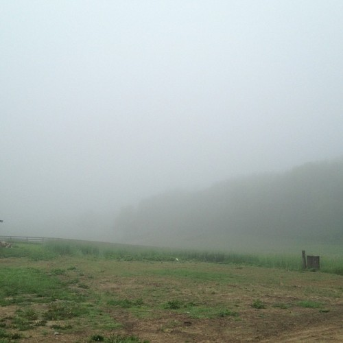 Foggy morning.  (at The Farm)