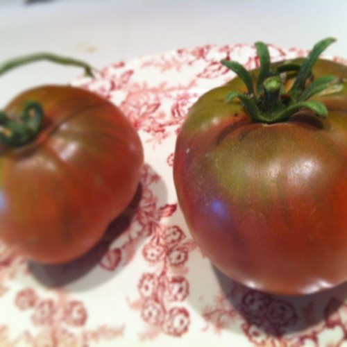 The first black krim. I imagine our heirlooms will start showing up at our Thursday morning market. #thesimplefarm. Apples are next!