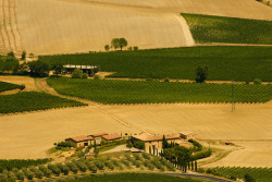 Field Insights ♦ Tuscany, Italy | by @spor