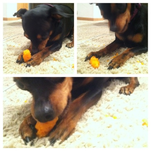 I will never understand my pooch's fascination with carrots, but it sure is adorable. Too bad he makes a huge stinking mess doing it!