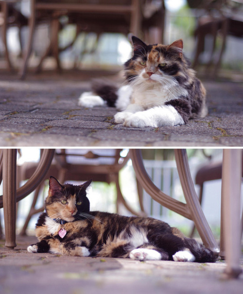 leavingmybody:  kitties on Flickr.