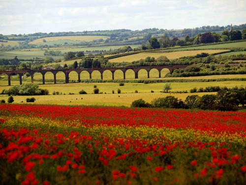 transylvanialand:  Harringworth Viaduct by saxonfenken on Flickr.  Welland Viaduct, also known as Harringworth Viaduct and Seaton Viaduct, is a railway viaduct which crosses the valley of the River Welland between Harringworth in Northamptonshire and Seaton in Rutland, England. It is 1,275 yards (1.166 km) long and has 82 arches, each of which has a 40 feet (12 m) span. It was completed in around 1878 and is the longest masonry viaduct across a valley in Britain.