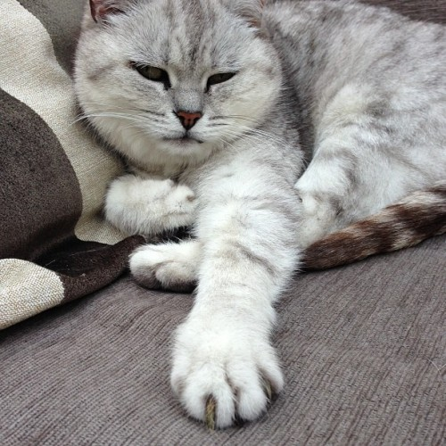 "Cat Puts Left Paw In, Refuses to Shake It All About In what's already being called ""PokeyGate"" by the local press, a cat named Smithers stunned onlookers yesterday when he refused to follow instructions during a heated round of hokey pokey. According to several reports, Smithers put his left paw in when instructed, but then flouted repeated requests to ""shake it all about."" ""The rules exist for a reason,"" said hokey pokey expert Steve Randolph. ""He made a mockery of game. There should be swift and severe penalties from the IHPB."" The IHPB — or International Hokey Pokey Board — which governs professional play worldwide, has not yet reached a decision about any punishment for Smithers. Via stokesy67."