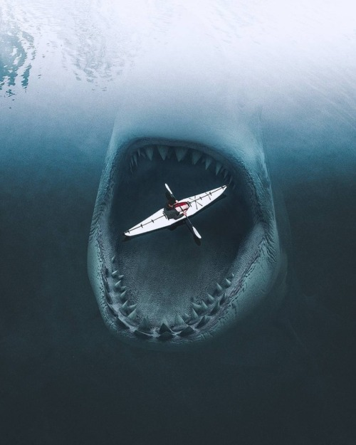 Photo of the Day photography photo manipulation photomanipulation digital art sharks shark kayak photooftheday beautiful pictures amazing pictures amazing images beautiful images images amazing beautiful seascape sea scape sea sea life