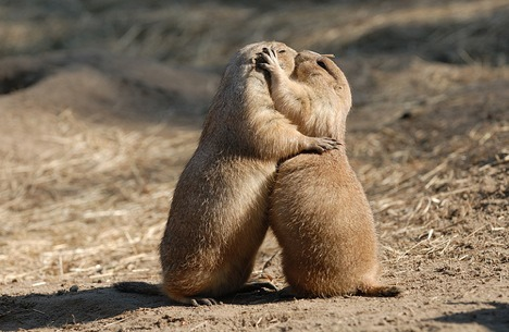 No, definitely this one actually. It says they're prairie dogs but they look like squirrels. But they're kissing which is nice. I was wondering where they buried their nuts and Carol said probably in the prairie, Bye followers