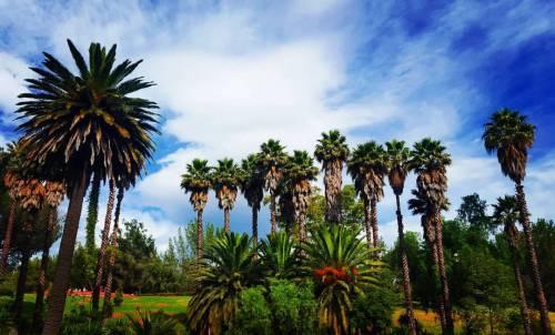 walking greenpath dayaway palmeras nature paisajes naturaleza running verde green palmeiras greenday