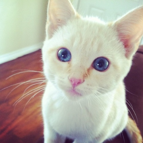 cutest-cats:  First time I met her.