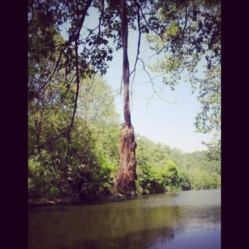 #ropeswing #adventuring #patapscoriver #patapscovalleystatepark #maryland #spring #old #water