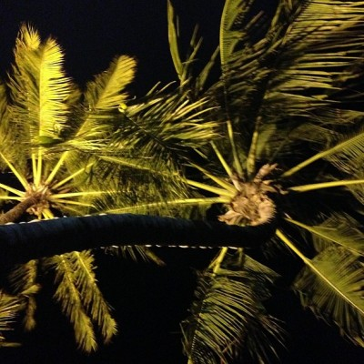 Palm trees. Brazil – Francisco Costa, Calvin Klein Collection Women's Creative Director (taken with Instagram)