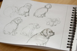 Some sketches of our foster pup.