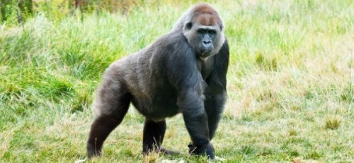 Roommate Confessions: The Gorilla in Booty Shorts You like to drink so much you piss all over the bathroom floor, huh? I wonder how long it will take you to realize the smell of piss on your bath towels. - Anonymous  So my roommate was the dirtiest, fattest slob on the planet. He would always go to the frat he was pledging and drink his weight in alcohol (well over 300 lbs). There were multiple times when he would come back to the room completely trashed and stoned and pass out. A few times some guys on my floor and I would draw on his face in sharpie. Too bad he was so greasy that he would wipe it off in the morning without the use of water or soap. To get him back for all the puke and piss on my carpet, I would steal his change from the desk. Thanks to his sloppiness I didnt pay a dime for laundry the entire semester. - Anonymous  Normally I like to hear music, I'm a fan. But that shitty god awful rap music that you blast on your speaker system in the wee hours of the morning just doesn't bode well in this thin walled dorm. So, I took my Astroglide and poured it all over your doorknob and dumped some water bottles in your bed with chocolate protein mix in them. Diarrhea shit stains much? - Anonymous  Feel the need to confess your misdeeds? Lay it on us gently here or just send us a message on Tumblr.