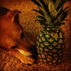 Somebody's ready for a night of delicious flavor. #psychslumberparty @psych_usa