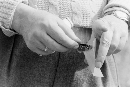 commovente:  Vladimir Nabokov and butterfly, Carl Mydans, 1958