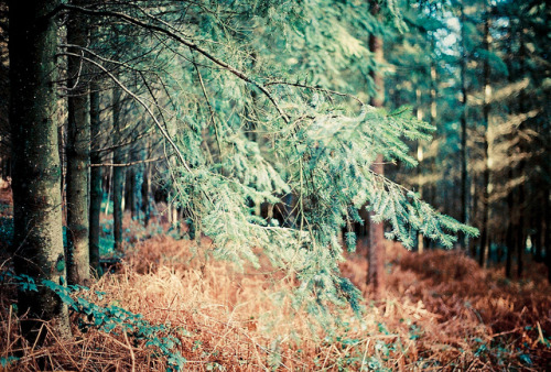 3blondmice:  Melting Forest | Film by Andrew - Marshall on Flickr.
