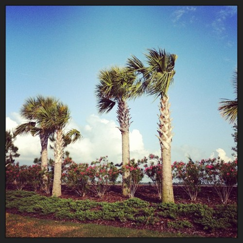 """Who need a Vacation? Put #Palm trees up in my house & have a #StayCation"" - #BigSean #SwitchUp"
