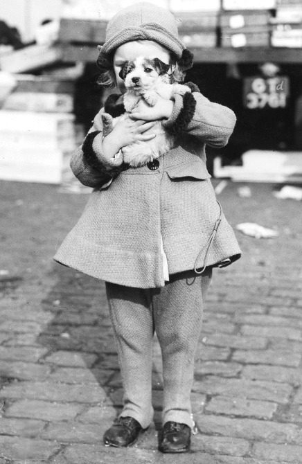denisebefore:  New Puppy fox 1938