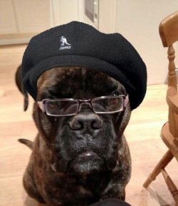 "collegehumor:  Dog May Actually Be Samuel L. Jackson ""Does he look like a bitch?"""