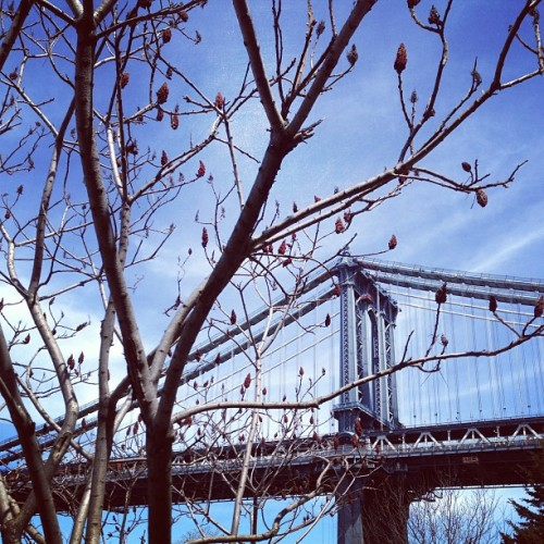 It could not be a more gorgeous spring day in #dumbo!