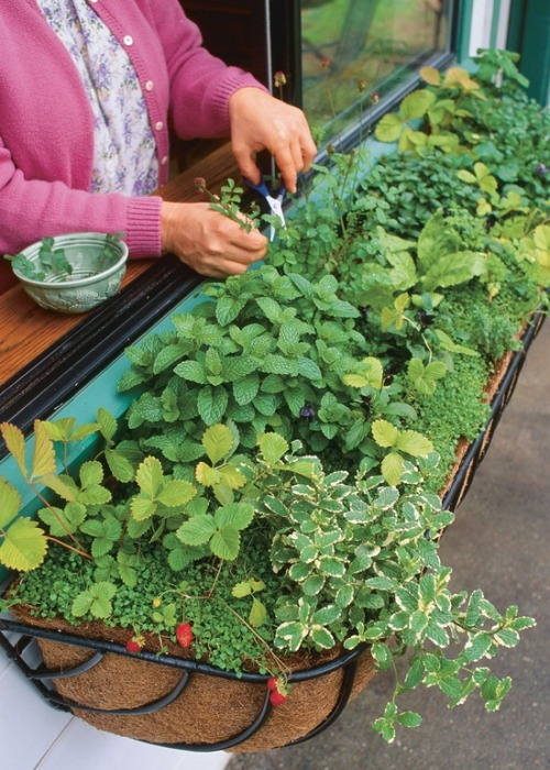 flowersgardenlove:  kitchen herb windowb Flowers Garden Love
