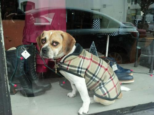 How much is that doggie in the window?  2muchcoffeechick:  What's up with this dog's eyes?