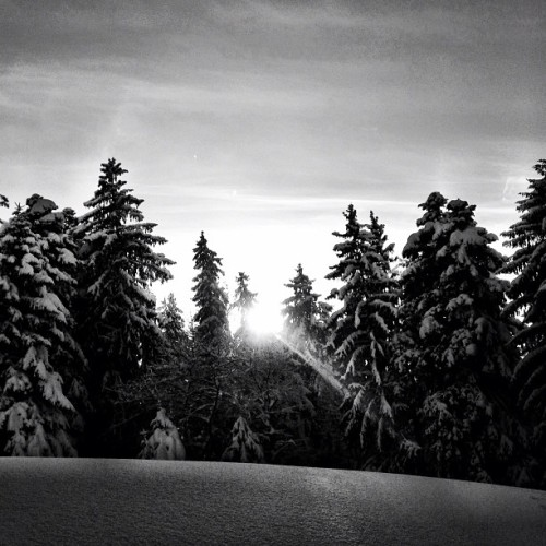 Magic #sun in #winter … #snow #tree #bw