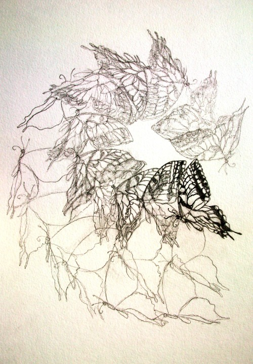 Butterfly sketch - 2010 - Louisa Boyd pencil on paper http://www.facebook.com/louisaboydart