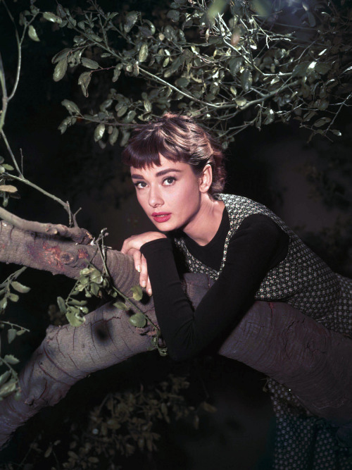 20th-century-man:  Audrey Hepburn; publicity still for Billy Wilder's Sabrina (1954)