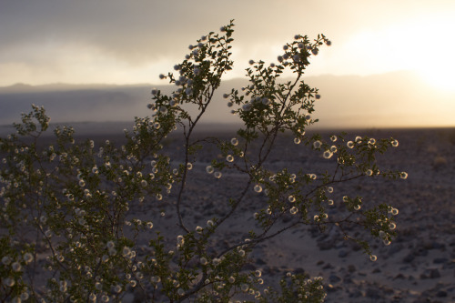 Creosote in the sunset by mooflyfoof http://flic.kr/p/ejTCcG (i like it!)