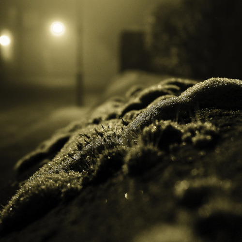A touch of frost on Flickr.#frost #fog #winter #photography #squarecrop #blackandwhite