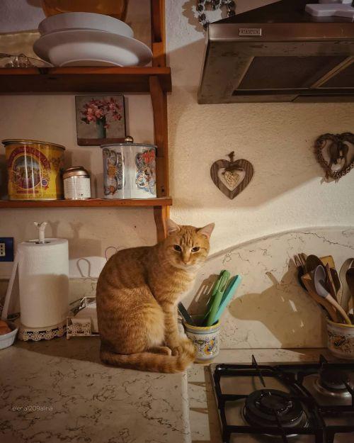 Via my Instagramhttps://www.instagram.com/elena1209alina/?hl=en #cat#cats#pets#pet#Cute Pets#cute#november#Autum