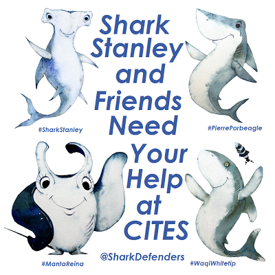 Have you met Shark Stanley and his mates? It's embarrassing that so few species of elasmobranchs are internationally protected from trade, especially considering how many are classified as endangered, AND the intense demand for fins and gill rakers for unproven medicinal properties.  CITES (Convention on International Trade in Endangered Species of Wild Fauna and Flora) is an multi-lateral (lots of countries) environmental agreement (they signed a treaty) targeting the trade in endangered species. Species are listed under one of three Appendices that controls the trade of these species and/or their parts between signatory countries.  And there aren't many sharks on there. Or rays.  In fact, the only elasmobranch species listed are:  - White shark (Carcharodon carcharias) - Basking shark (Cetorhinus maximus) - Whale shark (Rhincodon typus) - Seven species of Sawfish.  Pretty lacking don't you think? We can definitely do better. And a lot of people are trying. The next CITES meeting begins March 3rd 2013, and there's a big push for several elasmobranch species to be listed.  Shark Defenders have a fintastic campaign to show public support for this move. Meet Shark Stanley, Manta Reina, Pierre le Porbeagle and Waqi Whitetip. You can find them all on http://www.sharkdefenders.com/. Print out the cut outs and get modelling! Shark Defenders wants 5000 photos from all 177 signatory countries.  Check out the progress on Shark Stanley's Facebook page. How to submit? Upload your photos to Facebook, Twitter, Pinterest, and Instagram tagged with@SharkDefenders, #SharkStanley, and the country where you live (i.e. #USA, #Fiji, #Brazil, etc) or Email your photos to info@sharkdefenders.com for us to compile into a unique petition. You can also send your photos directly to your country's CITES representative (follow this link and look up your country).  I can't wait until I can get to a printer and a laminator and take our friends for an underwater photo shoot!
