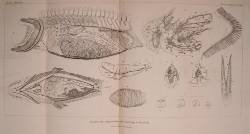 Details of the splanchnology and angiology of the Perch by BioDivLibrary on Flickr. The animal kingdom, arranged according to its organization, serving as a foundation for the natural history of animals :.London :G. Henderson,1834-1837..biodiversitylibrary.org/page/28028139