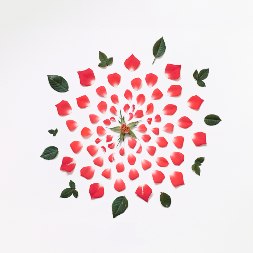 photojojo:  Petal by petal, Fong Qi Wei dismantles various flowers and reconstructs them in symmetrical arrangements. Perhaps a nod to #things organized neatly? Flowers Reconstructed as Symmetrical Explosions via Beautiful Decay  Wow!