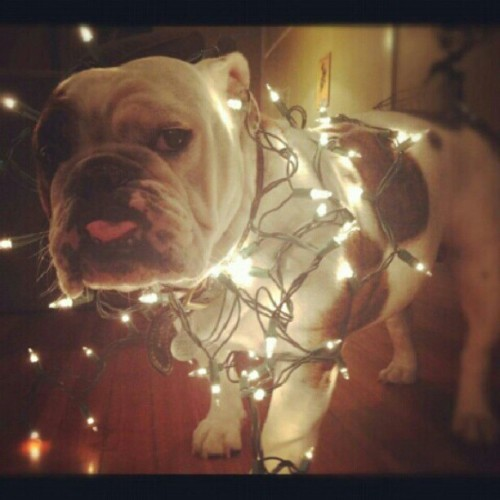Mabel hates decorating. Like mother, like daughter. (Photo cred: @laurakepus